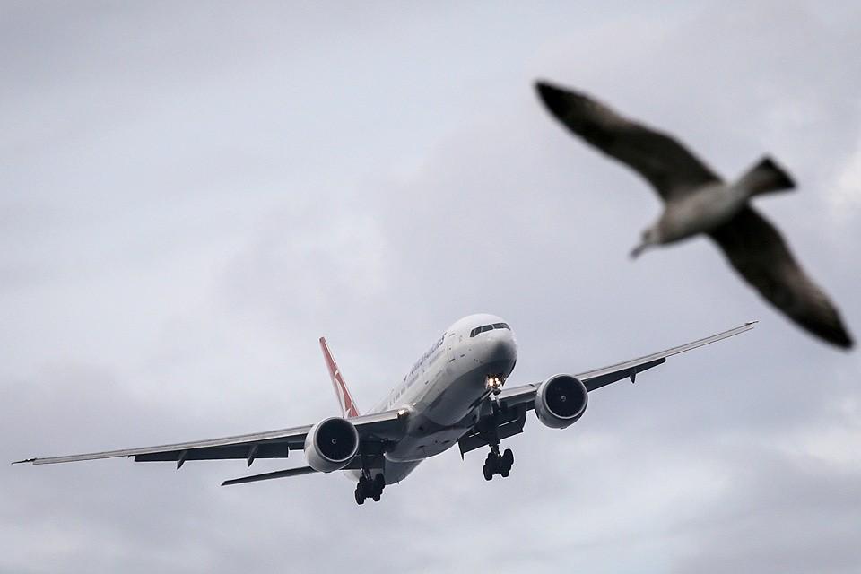 Росавиация фиксирует более тысячи попаданий птиц в самолеты ежегодно.