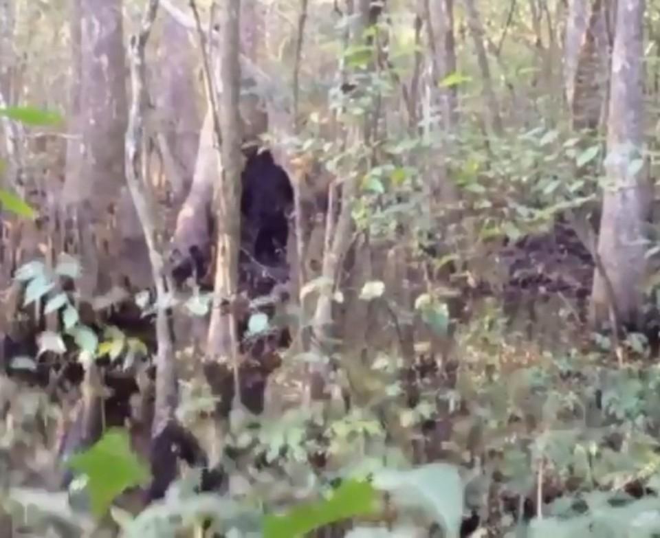 Американец заснял в лесу двухметровое существо и уверен, что это йети