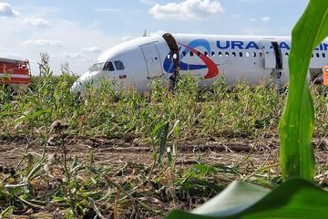 Севший на кукурузное поле у Жуковского самолет начали пилить на куски