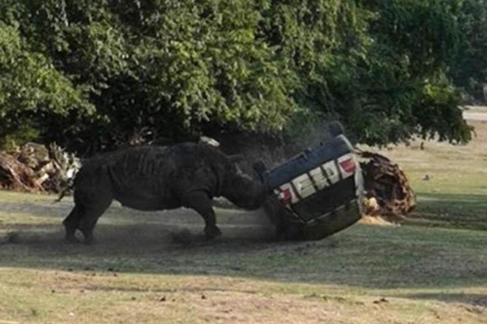 Инцидент произошел в природном парке Серенгети в немецком Ходенхагене