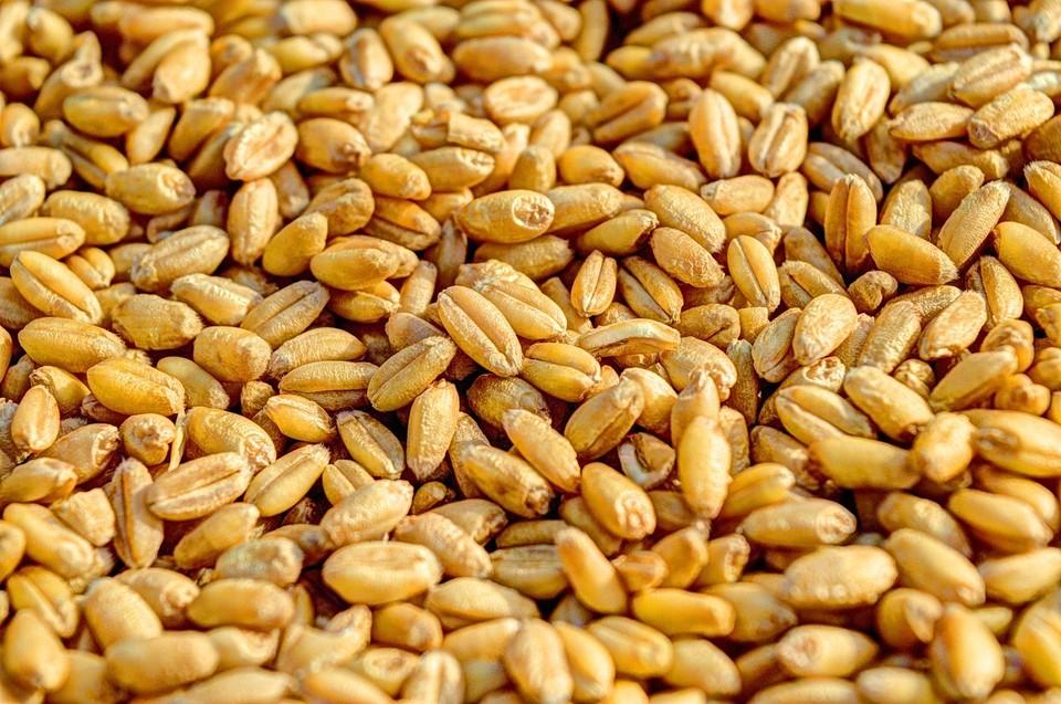 Тюменское предприятие хранило зерно в лужах. Фото - pixabay.com.