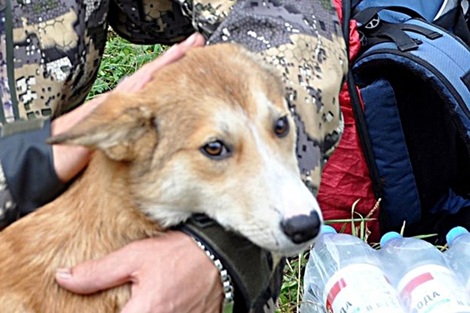 «Увидел эти глаза и не смог отказаться»: пес, которого бросил умирать на скале прошлый хозяин, нашел новый дом. Фото: Геннадий БЕЛОВ.