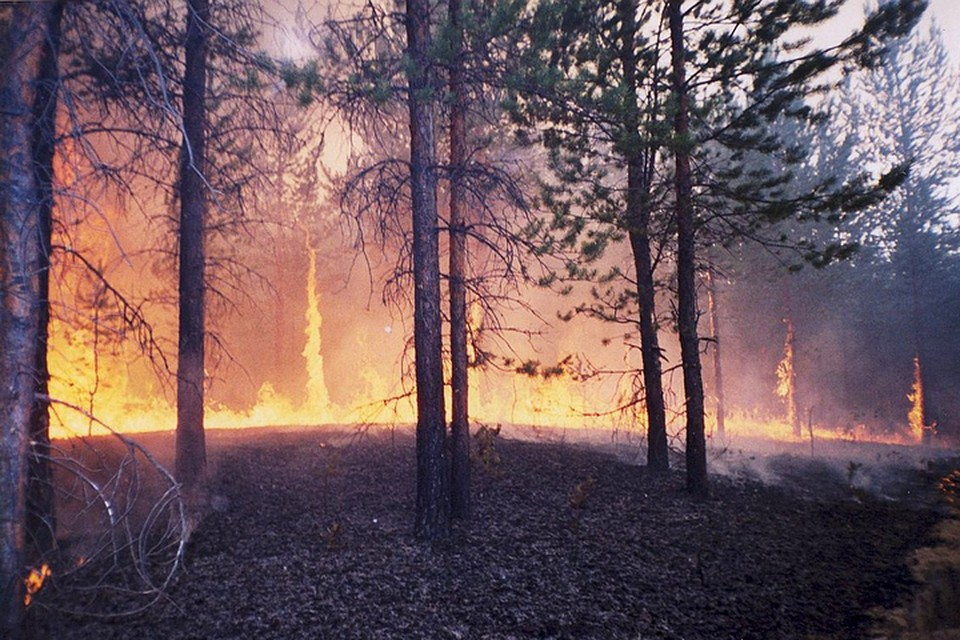 Регионы Сибири оказались просто не в состоянии справиться с бушевавшей стихией. Фото: Лесопожарный центр