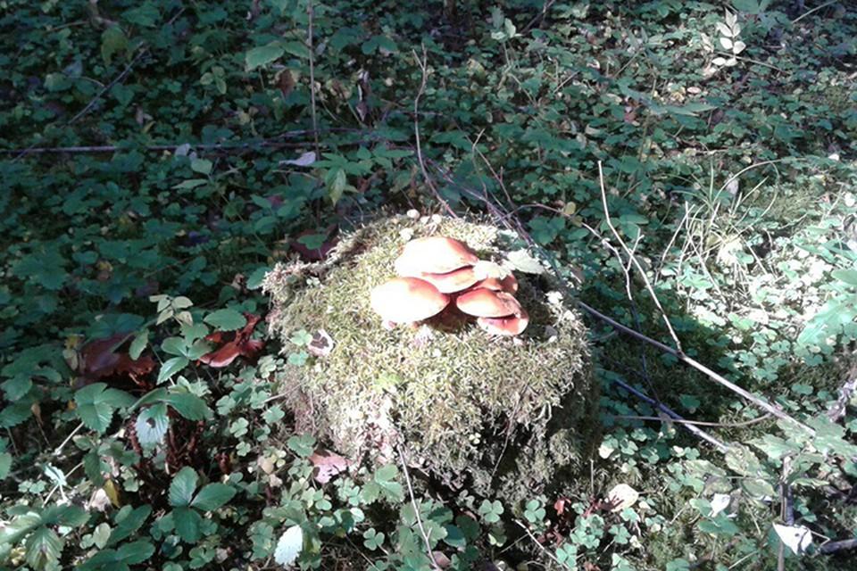 В Речицком районе потерялся грибник, его искали пять часов.