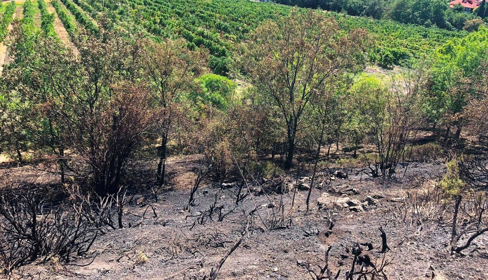 """Речь идет о виноградников, которые не приносят урожай. Фото: Архив """"КП"""""""