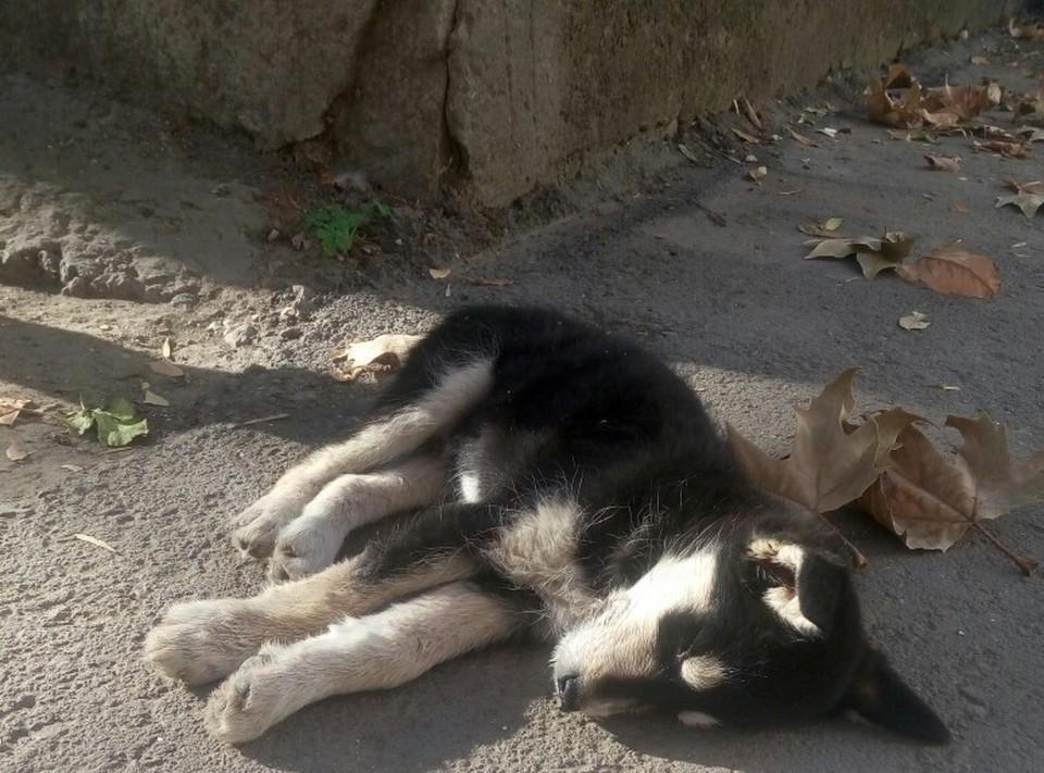 Щенок едва не умер от алкоголя. Фото: Анна Крымская/VK