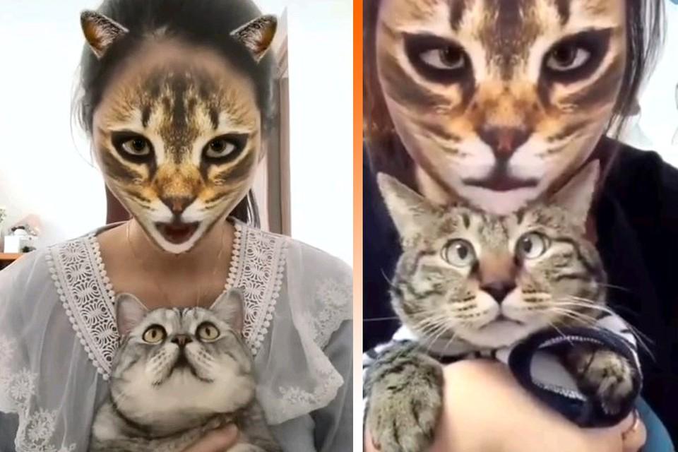 Новый фильтр для TikTok набирает популярность среди владельцев котиков.
