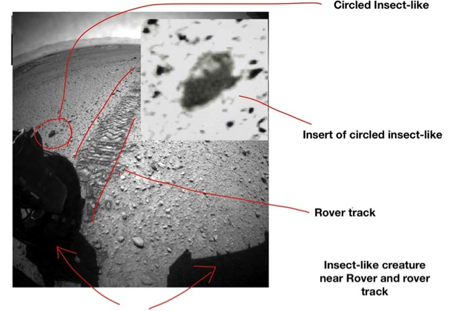 Марсоход NASA чуть не раздавил одного из марсианских тараканов, перебегавших дорогу.