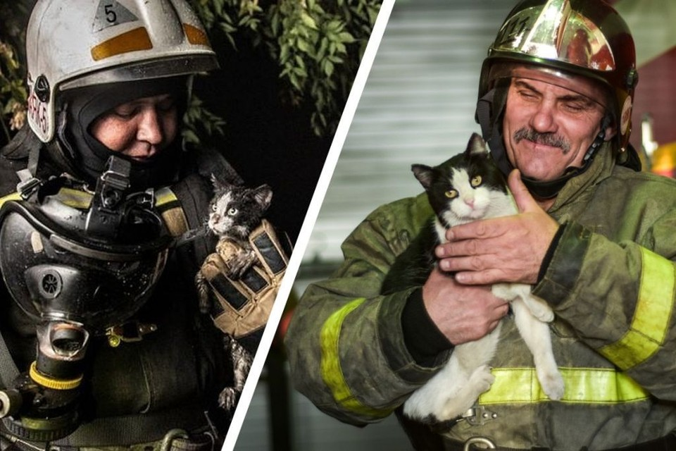 Узнали? Тот самый котенок, которого спасли пожарные годы назад. Фото: Виктор Боровских/ГУ МЧС России по Новосибирской области/Алена МАРТЫНОВА.