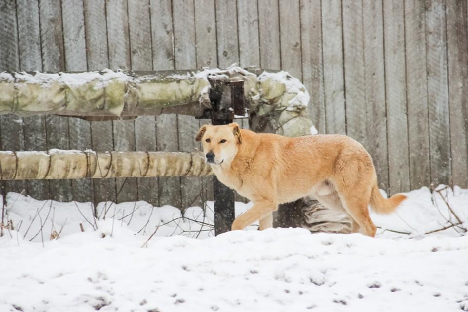 По словам местных жителей, собаки обитают у теплотрассы.
