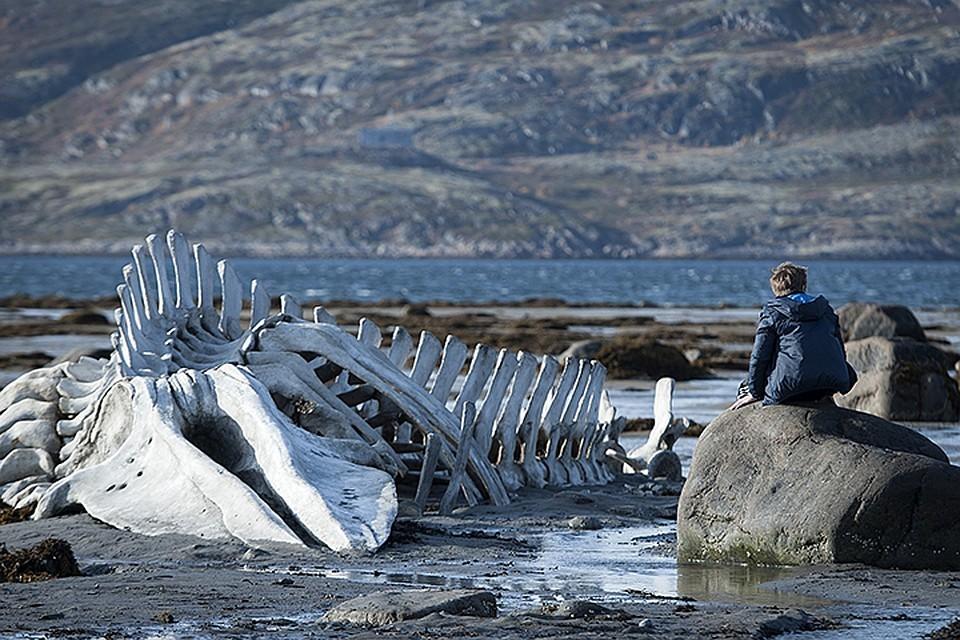 «Левиафан» Звягинцева попала в список лучших фильмов десятилетия
