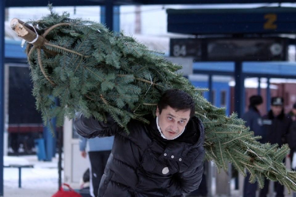 Елочные базары начнут работу 14 декабря в Иркутске