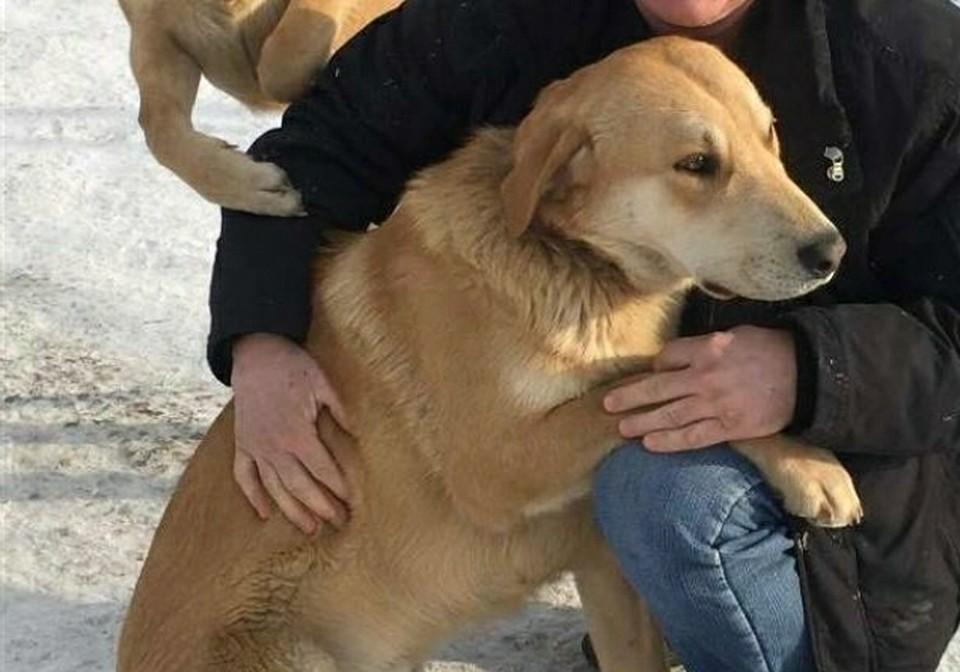 Молодой пес в момент пропажи был без ошейника Фото: семейный архив заводчиков