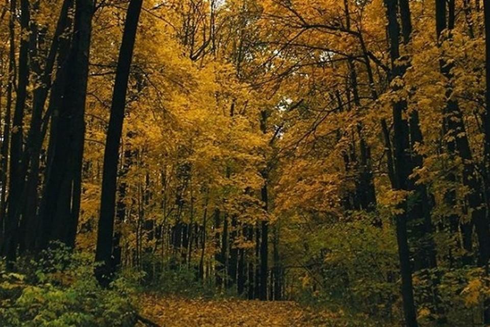 Экотропа проходит по самым живописным уголкам Воронежа и ближайших районов.
