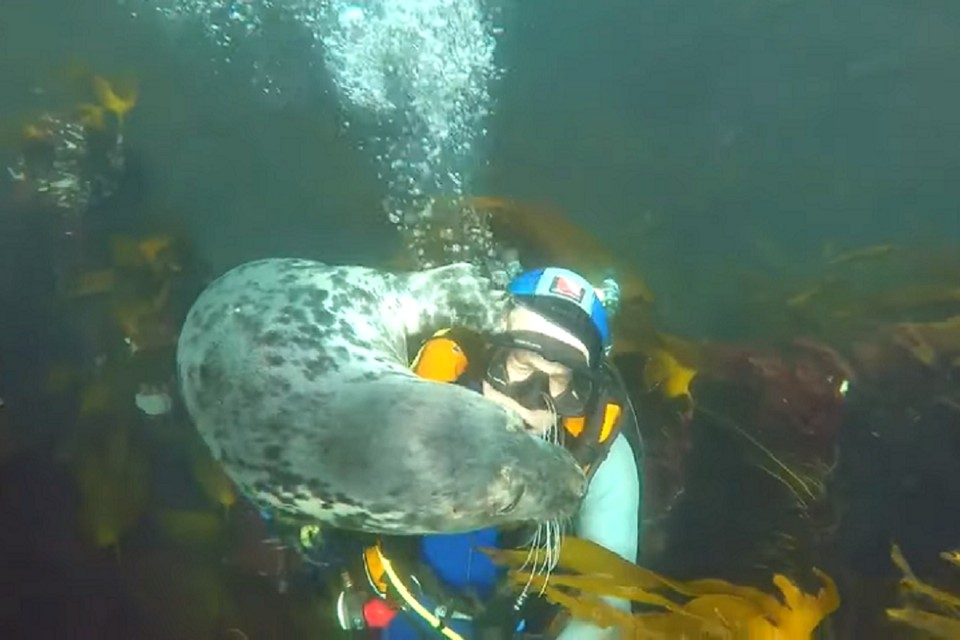 Тюлень вел себя очень дружелюбно - возможно, ему просто хотелось общения