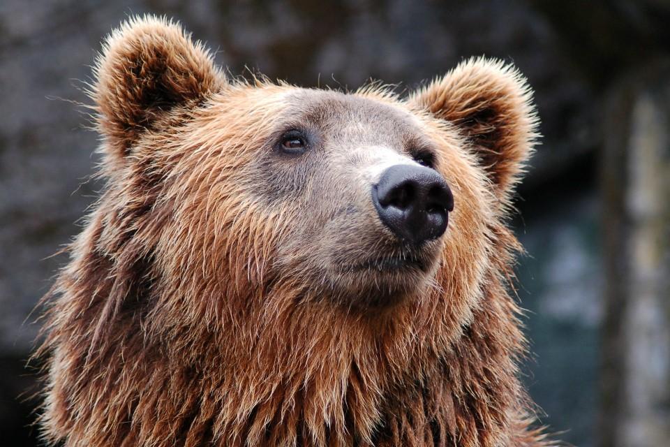 Мурманская область вошла в топ-10 по фобиям. Фото: pixabay.com/