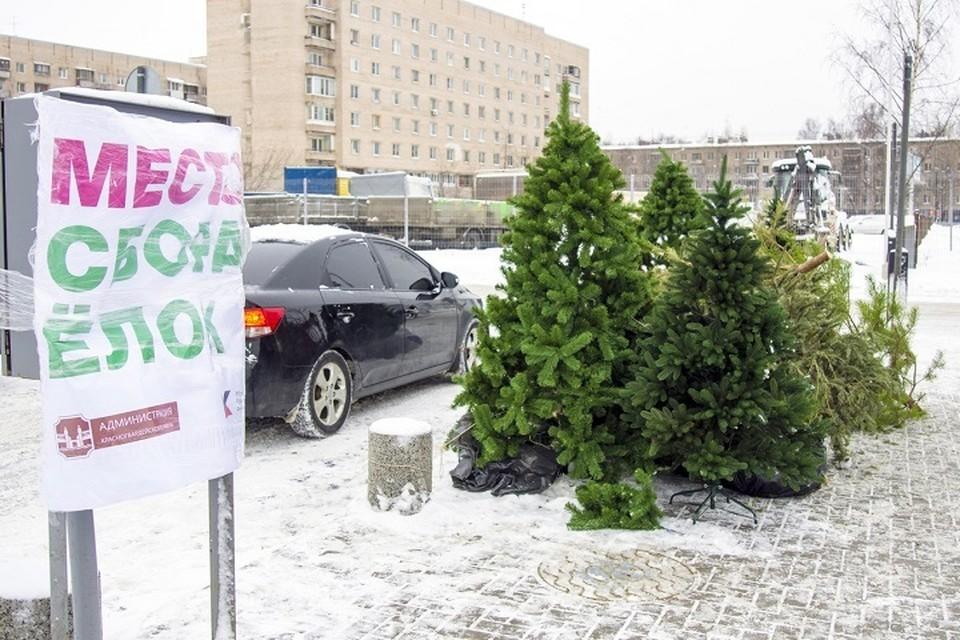 В Петербурге открылись пункты сбора елок / Фото: ВК «Ёлки, палки и щепа», сбор и переработка хвойных