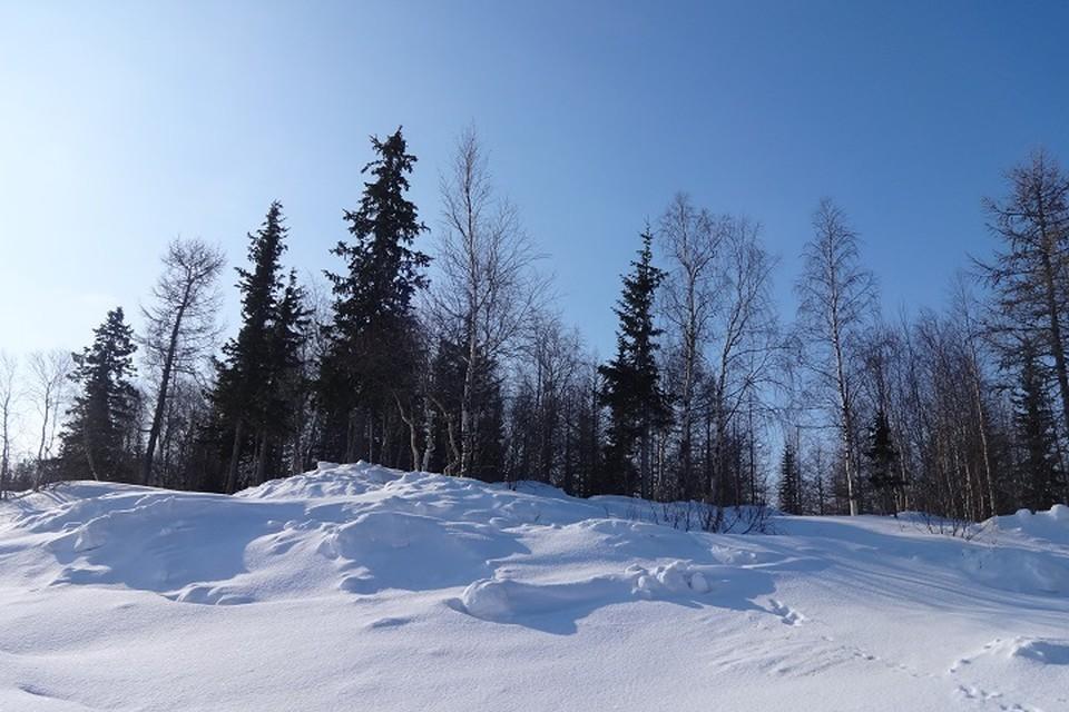 Погода на Ямале 14 января: температура воздуха опустится до - 21 градуса