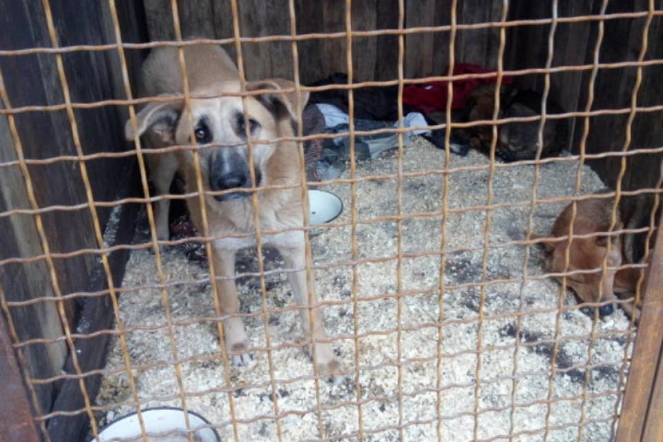 За год в Мариуполе выловили почти 2 тысячи животных. Стерилизовали каждую четвертую собаку, остальных – усыпили. Фото: Фейсбук/Анна Прокопенко