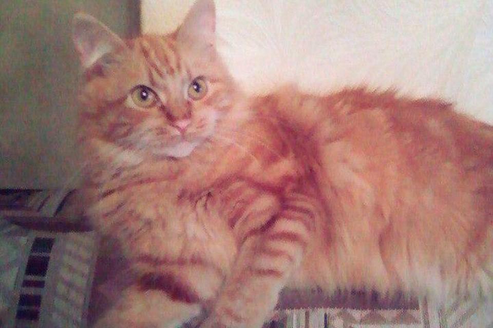 Кошка обезумела и напала на хозяйку Фото: скрин страницы хозяина кошки