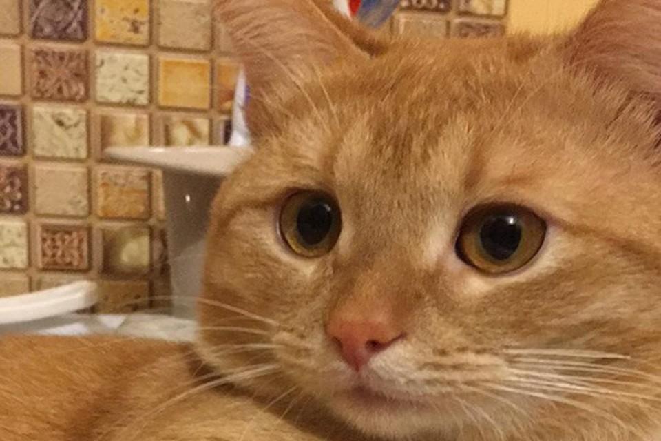 Нижегородский кот Рыжий стал звездой TikTok. ФОТО: Илья Приходько