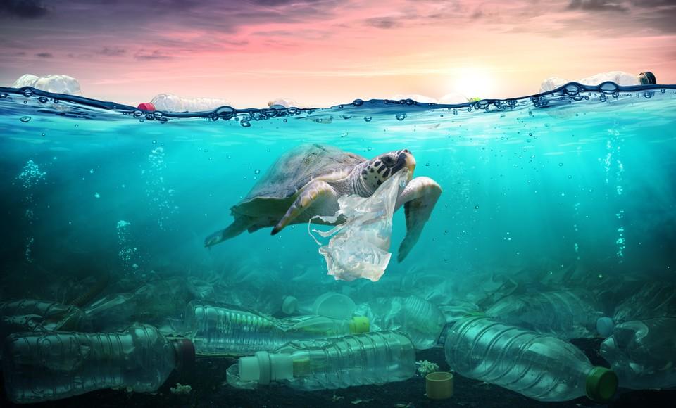 Cлабость к запахам смертельно опасна для морских черепах. Фото: shutterstock.com