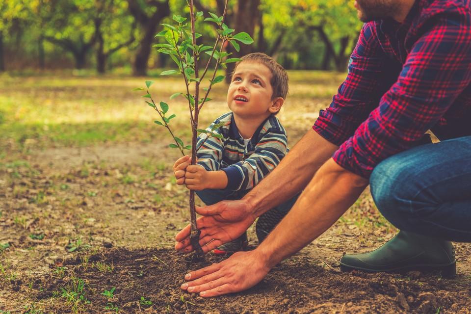 Такой подарок будет радовать глаз и приносить пользу планете. Фото: shutterstock. com