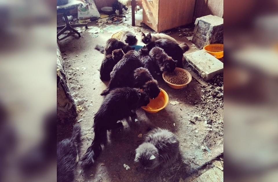 Новый дом ищут 15 кошек. Фото: Надежда Пасечная