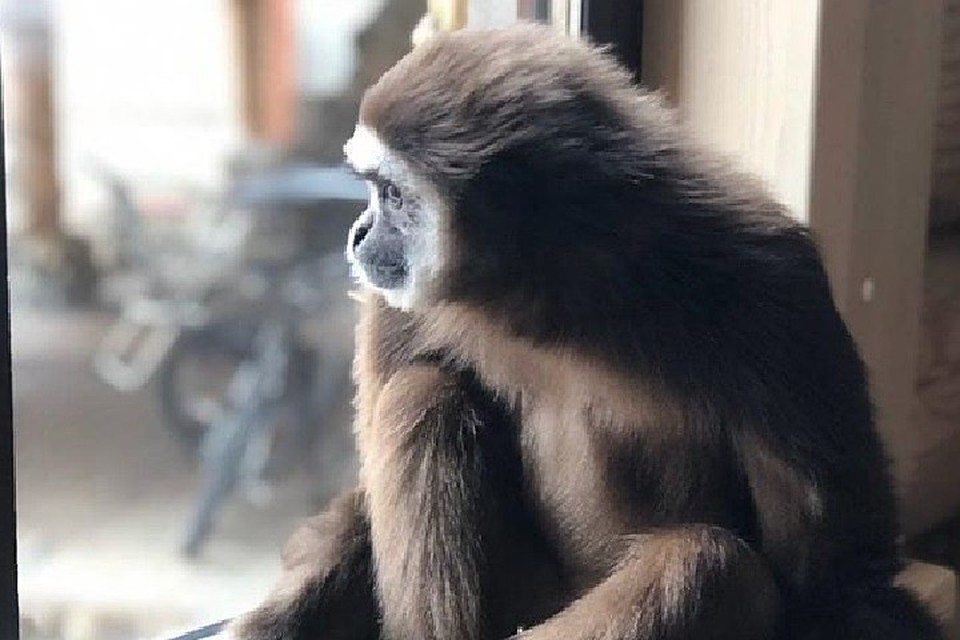 Передвижному зоопарку пришлось оставить 11 обезьян в Иркутске из-за коронавируса. Фото: Инстаграм