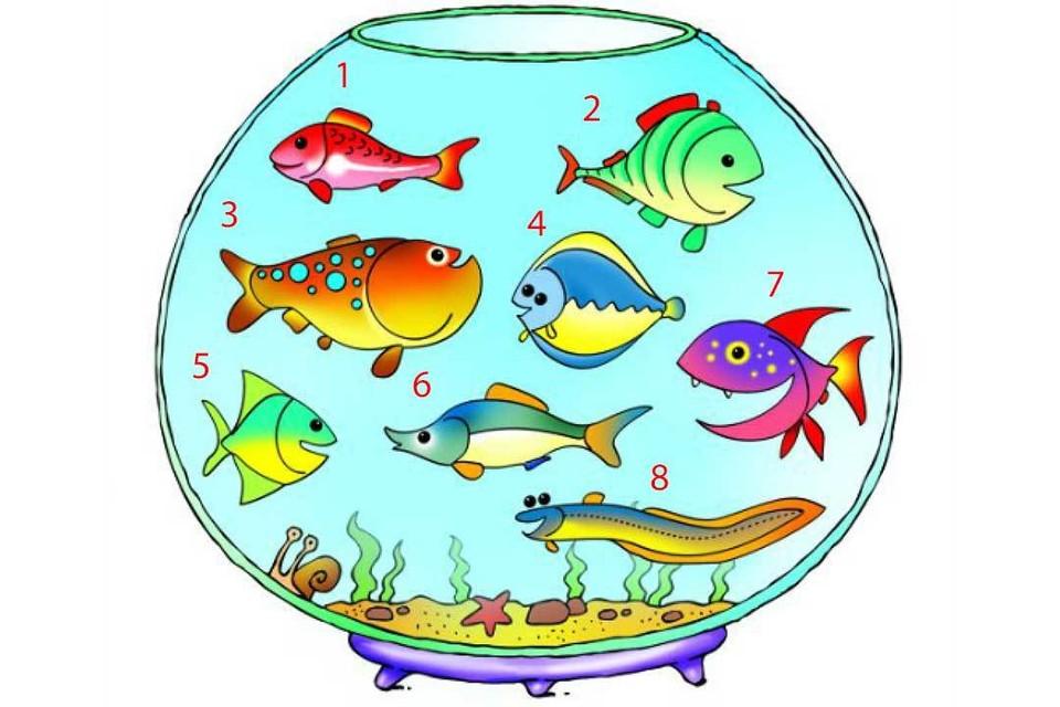Посмотрите, какая рыбка вам нравится. Она может «рассказать» о вашем внутреннем мире.