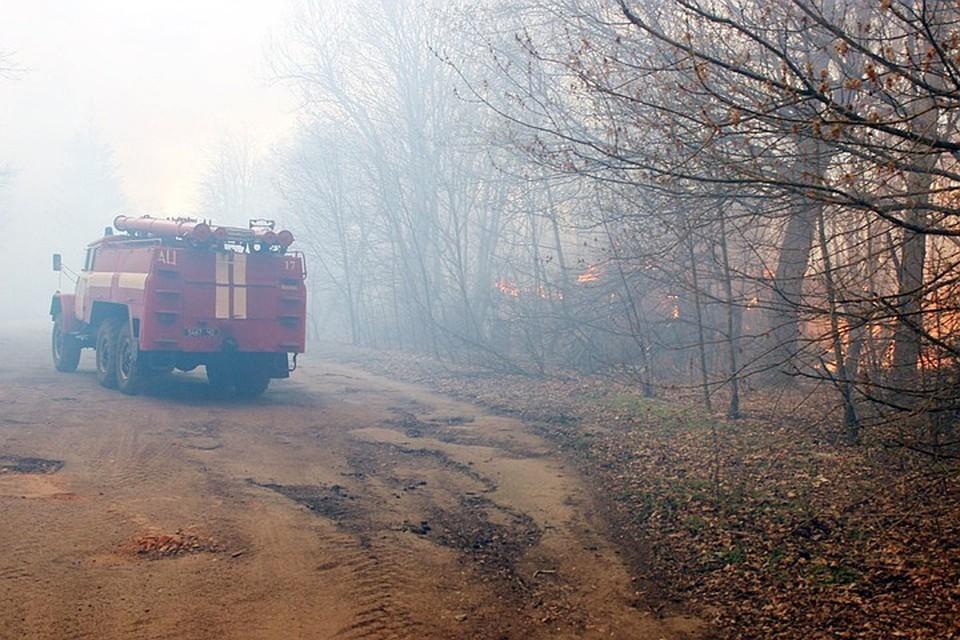 Пожарные остановили распространения огня в Чернобыльской зоне