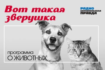 Основная профилактика для собак – защита от клещей