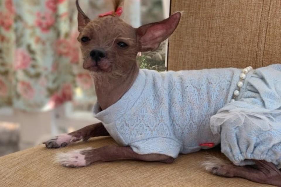 Сейчас Линда купается в любви. Фото: страница Вконтакте реабилитационного центра бездомных животных города Шахты «Святобор».