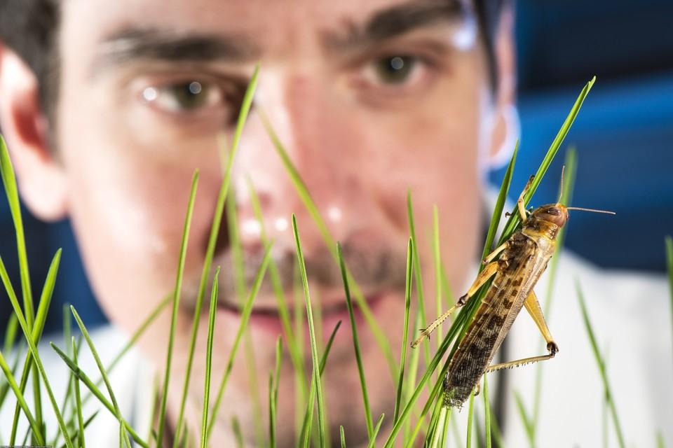 За последние несколько лет был опубликован ряд исследований, которые показывают резкое снижение численности насекомых во времени.