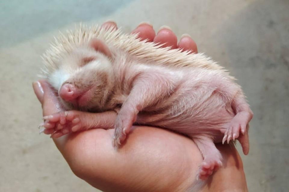 Малыш родился альбиносом. Фото: Дмитрий Демчук/FB