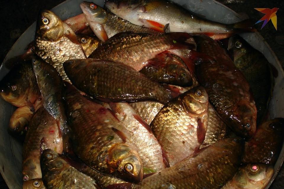 Рыбы-мигранты вытесняют из рязанских водоемов традиционные виды.