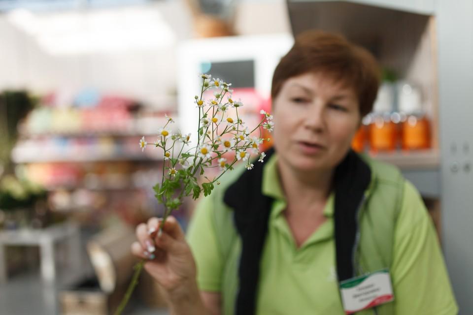 Флорист собирает букет из ромашек - символа праздника