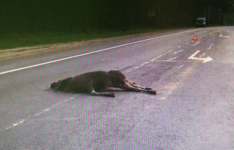 В ДТП страдают и люди, и животные. Фото предоставлено пресс-службой ГИБДД