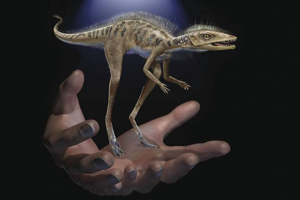 Так выглядел крошечный динозавр, от которого произошли все крупные ящеры.