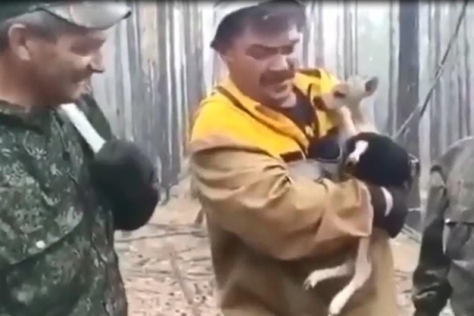 Не знал, как выбраться из огненной ловушки: лесник спас олененка в сибирской тайге. Фото: Бичурский лесхоза в Бурятии
