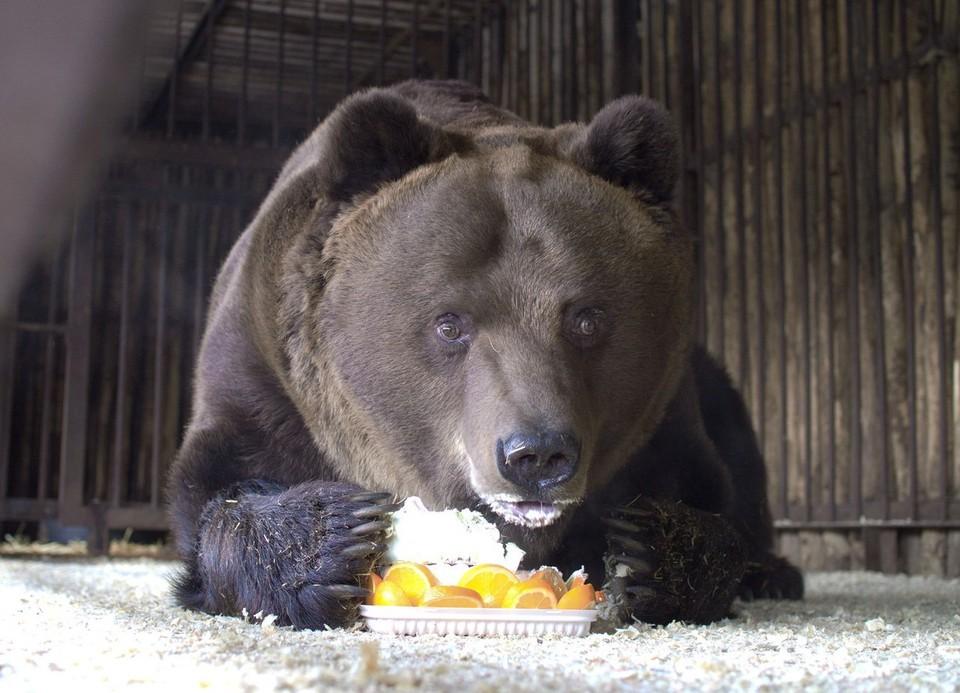 Питомцы Самарского зоопарка соскучились по посетителям. Фото: Самарский зоопарк