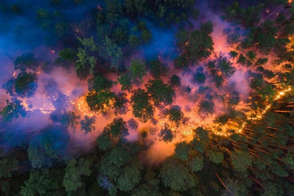 Пожары в красноярской тайге. Фото: Greenpeace
