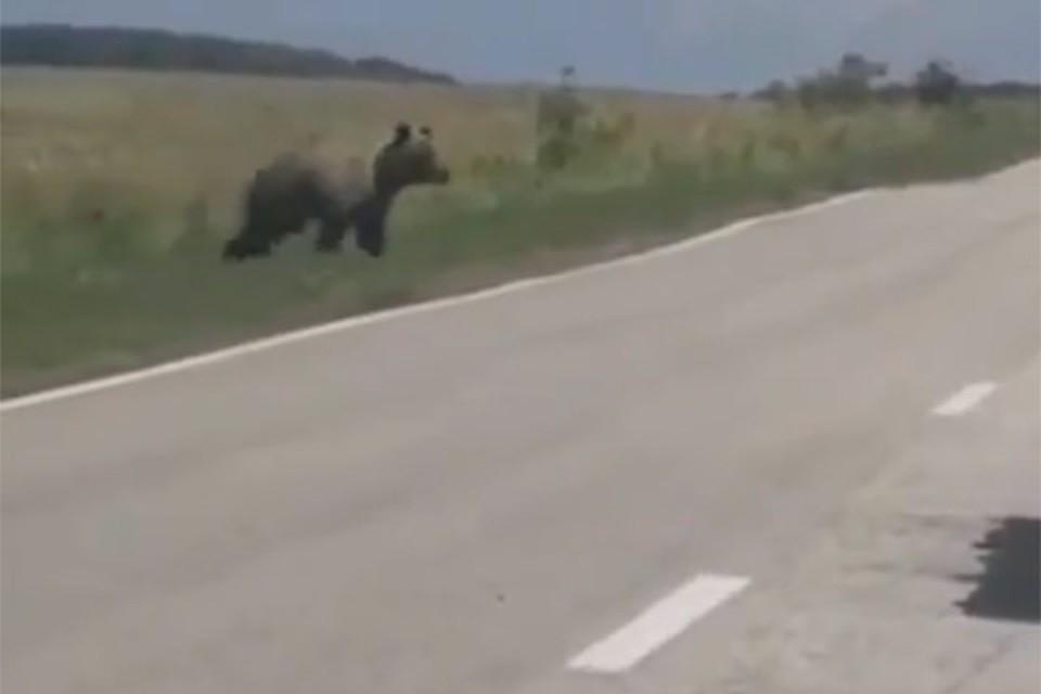 Медведь на трассе