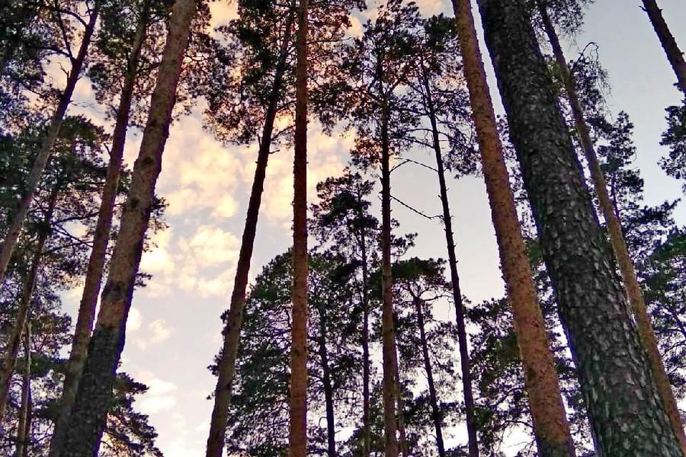 Липчанам запретили ходить в лес до 21 августа