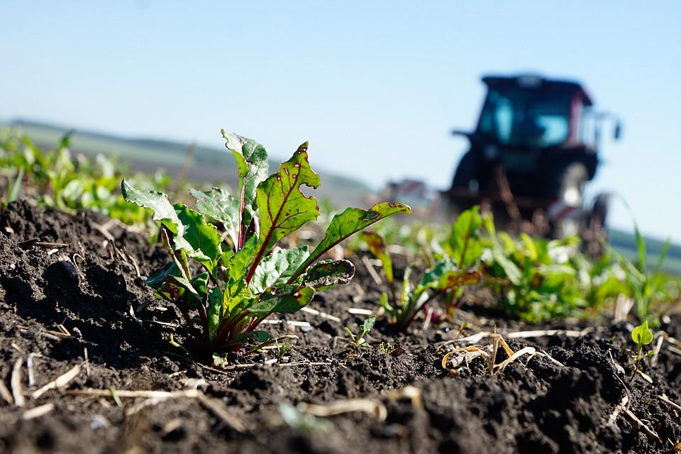 Нужна инвентаризация всех земель в России. И требуется провести землеустройство, чтобы с полной отдачей эту землю можно было бы использовать