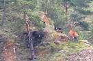 «Лихо он их запинал!»: под Красноярском загнанный на обрыв олень смог дать отпор стае бездомных псов