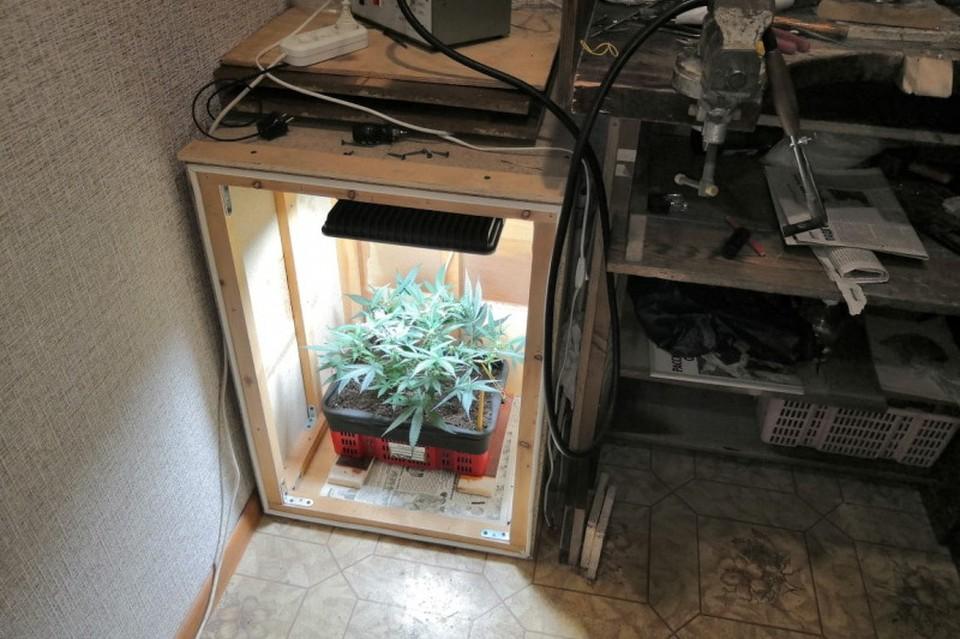 Полиция изъяла три куста конопли, которые росли в квартире. Фото: пресс-служба ОМВД России по Находке