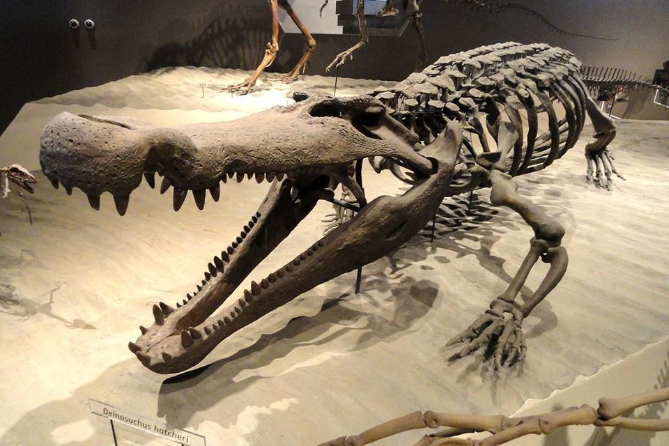 """Ученые восстановили скелет """"чудовищного крокодила""""."""