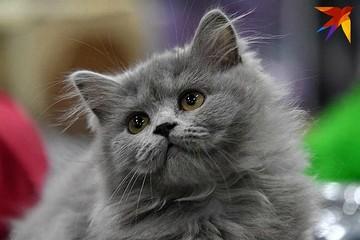 """Выбираем """"Самого главного кота Заполярья"""""""