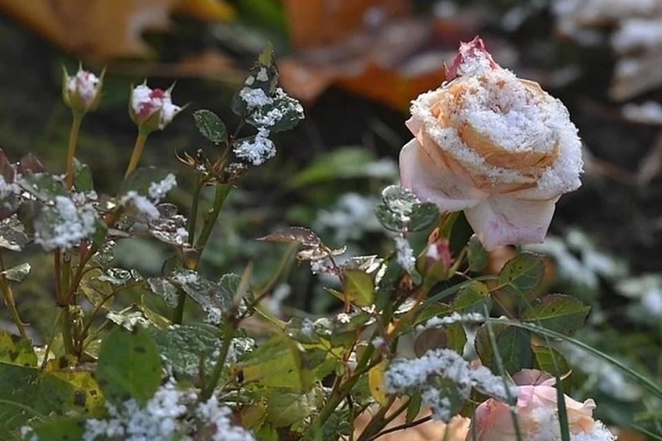 Заморозки ожидаются в Нижегородской области.
